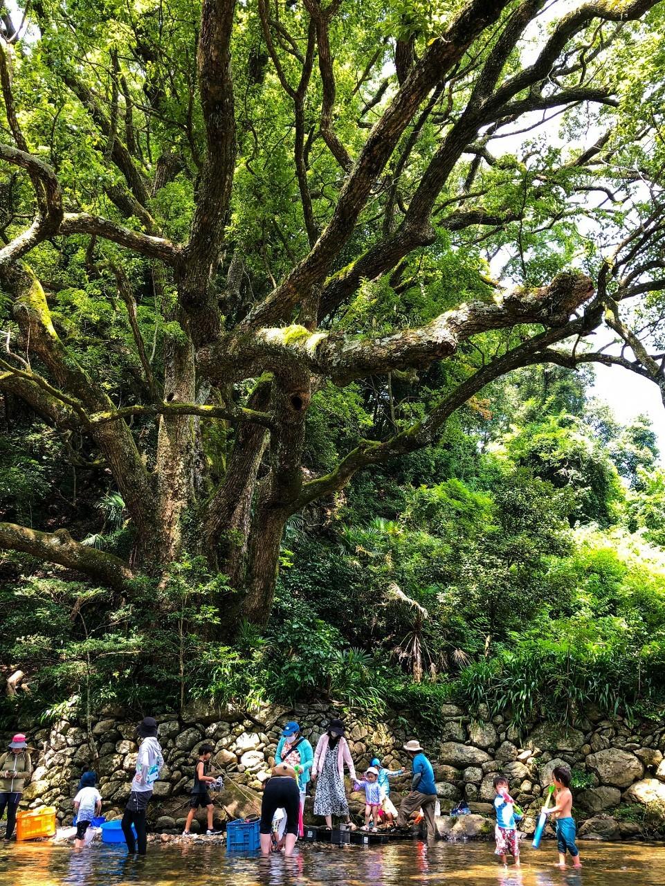 森のようちえん たんぽぽの根っこ